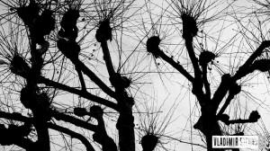koruna stromu