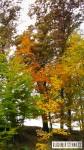 2011_10_29-paleta-02