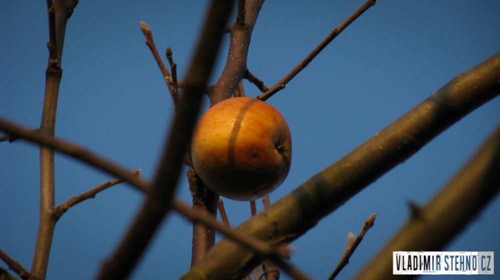 2011_11_11-jablko