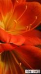 2012_03_09-kvety