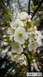 2012_04_21-kvety