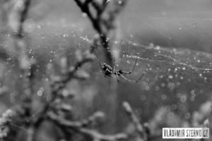 Pavouk, Libice nad Doubravou, 26.09.2014