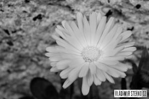 Květina, Libice nad Doubravou, 04.10.2014