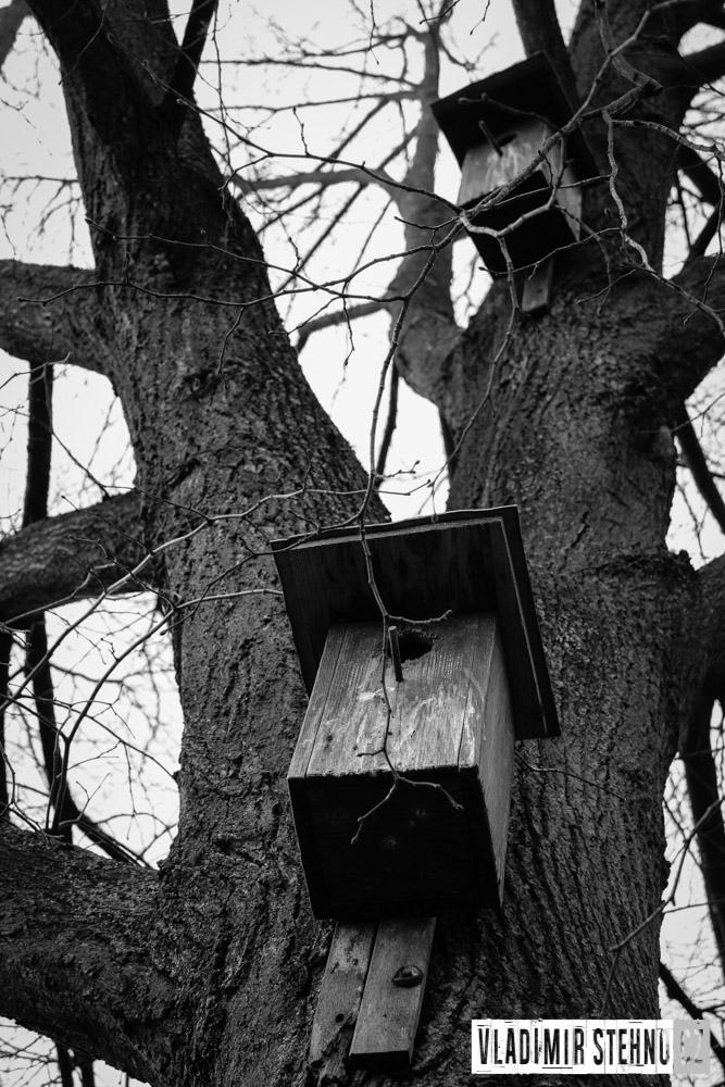 Ptačí budky, Bezděkov, 11.04.2015